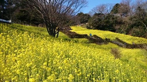 金沢自然公園.jpg