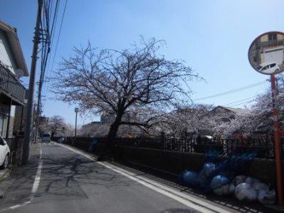 大岡川 さくら道 2015.03.001.jpg