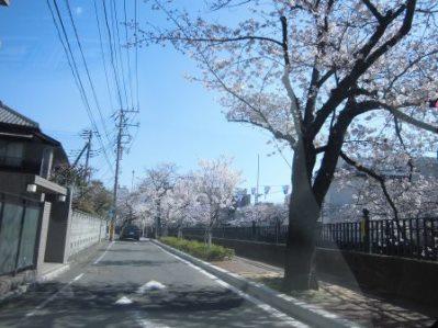 大岡川 さくら道 2015.03.006.jpg