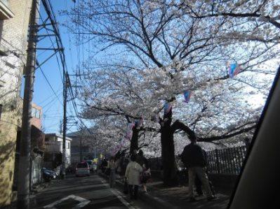 大岡川 さくら道 2015.03.007.jpg