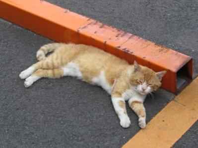 梅雨明け 猫バテ.04.jpg