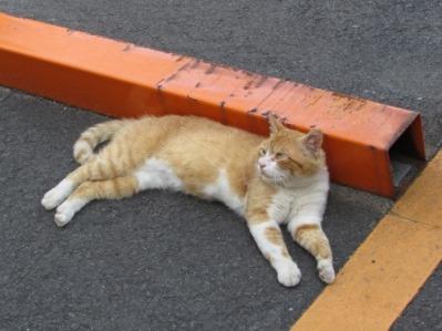 梅雨明け 猫バテ.05.jpg