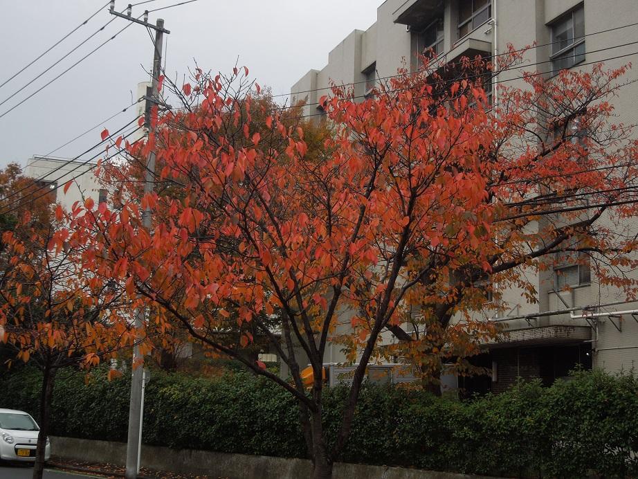 2014_12_05_01.jpg
